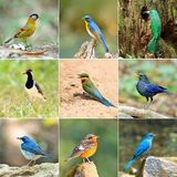 Collection of birds Stock Photos