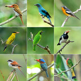 Collection of birds stock photos