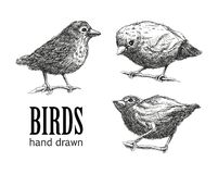 Collection of birds. vector eps8 Royalty Free Stock Image