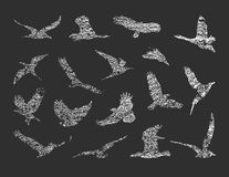 Collection of birds. vector eps 8 Stock Images