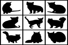 Collection of black cats Royalty Free Stock Photography
