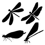 Collection of black dragonfly silhouettes. Set of isolated images on white background. Drawing of an insect Stock Image