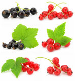 Collection of black and red currant fruits. Isolated on white background stock image