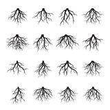 Collection of black Trees. Vector Illustration. Set of black Trees. Vector Illustration Royalty Free Stock Images
