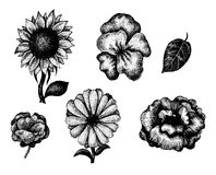 Collection of black and white hand drawn flowers Royalty Free Stock Image