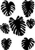 Collection of black on white leaves monstera. Isolated on white background. Tropical plant. Stock Photos
