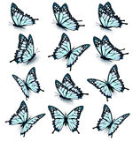 Collection of blue butterflies, flying in different directions. Vector royalty free illustration