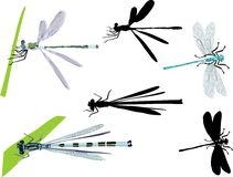 Collection of blue dragonflies Royalty Free Stock Photo
