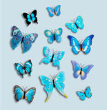 Collection 12 Blue Fantasy Butterflies Insect Royalty Free Stock Image