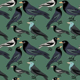 Collection of blue, grey and white birds. Seamless pattern. Vector illustration on green background. Hand drawn collection of blue, grey and white birds with royalty free illustration