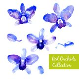 Collection of blue watercolor orchids Stock Images