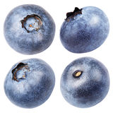 Collection of blueberry berry isolated on white Royalty Free Stock Images