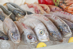 Collection of bream fish on display in seafood restaurant Stock Images