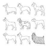 Collection of breeds dog in line Royalty Free Stock Image