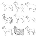 Collection of breeds dog in line Stock Photo