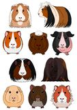 Collection of breeds of guinea pig. With outline on white background royalty free illustration