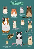 Collection of pet rodents. Collection of breeds of mice and rats for pets, with breed names royalty free illustration