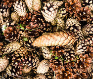 Collection of brown pine cones for backgrounds or textures. Clo royalty free stock photography