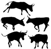 Collection of Bull Silhouette. This is file of EPS10 format Stock Photos