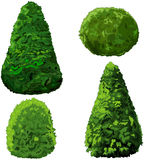Collection of Bushes and Cypress. Illustration of set of bushes and cypress Stock Photo