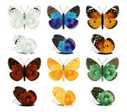 Collection of the butterflies Royalty Free Stock Photos