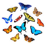 Collection of butterflies Royalty Free Stock Images