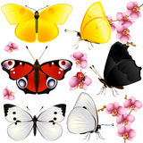 Collection of butterflies Stock Photo
