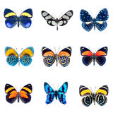Collection of Butterflies on a white background Stock Photo