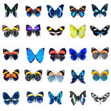 Collection of Butterflies on a white background Royalty Free Stock Photo