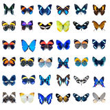 Collection of Butterflies on a white background Royalty Free Stock Image