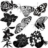 Collection butterfly flower Royalty Free Stock Image