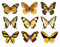 Collection of butterfly moth isolated on white Royalty Free Stock Photo
