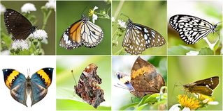 Collection of butterfly Stock Photography