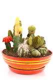Collection of cacti Royalty Free Stock Photography