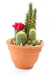 Collection of cactus Stock Photography