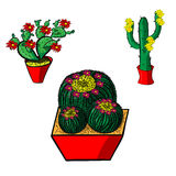 Collection cactus with flower Stock Image