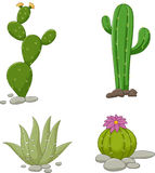 Collection of cactus illustration vector illustration