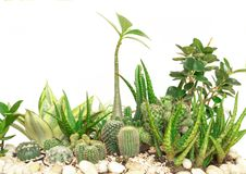 Collection cactus isolated on white background.  royalty free stock photography