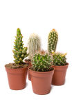 Collection of cactus isolated on white background Royalty Free Stock Images