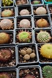 Collection of cactus. Picture of Succulent plants in the greenhouse closeup royalty free stock photography
