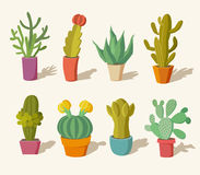Collection of cactus Stock Photos