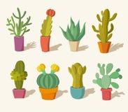 Collection of cactus Stock Photos