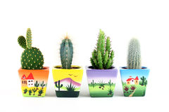 Collection of cactuses isolated on white. Royalty Free Stock Image