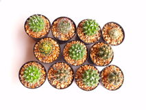 Collection of cactuses in a pot over white Royalty Free Stock Image