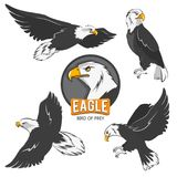 Collection of cartoon eagles. Flying birds isolate on white. Eagle animal flying, american predatory bird. Vector illustration Stock Images