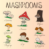 Collection of cartoon mushrooms. Hand drawing. Edible, poisonous. The names of each mushroom royalty free illustration