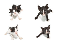 Collection of cat images Stock Photo