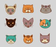 Collection of cat line and color vector icons Stock Photo