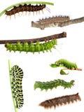 Collection of caterpillars Stock Photos