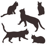 Collection of cats Stock Photos